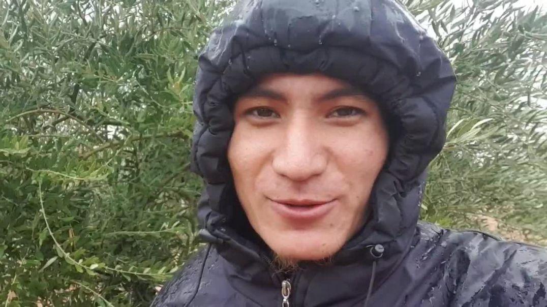 Благословенный дождь на фронтах Шама