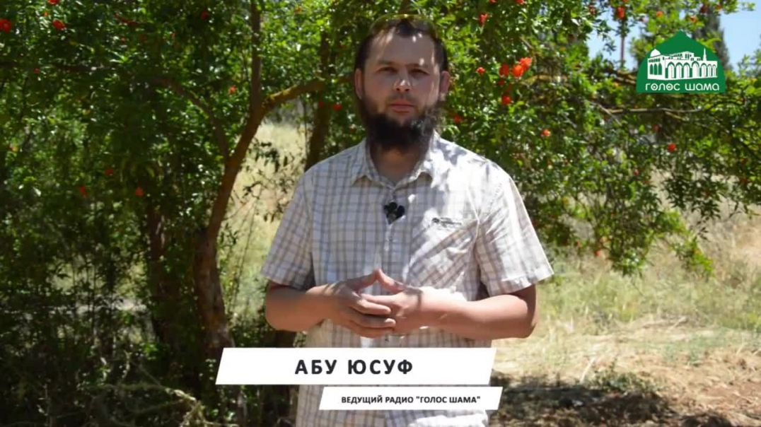 Быт в Шаме | Презентация рубрики